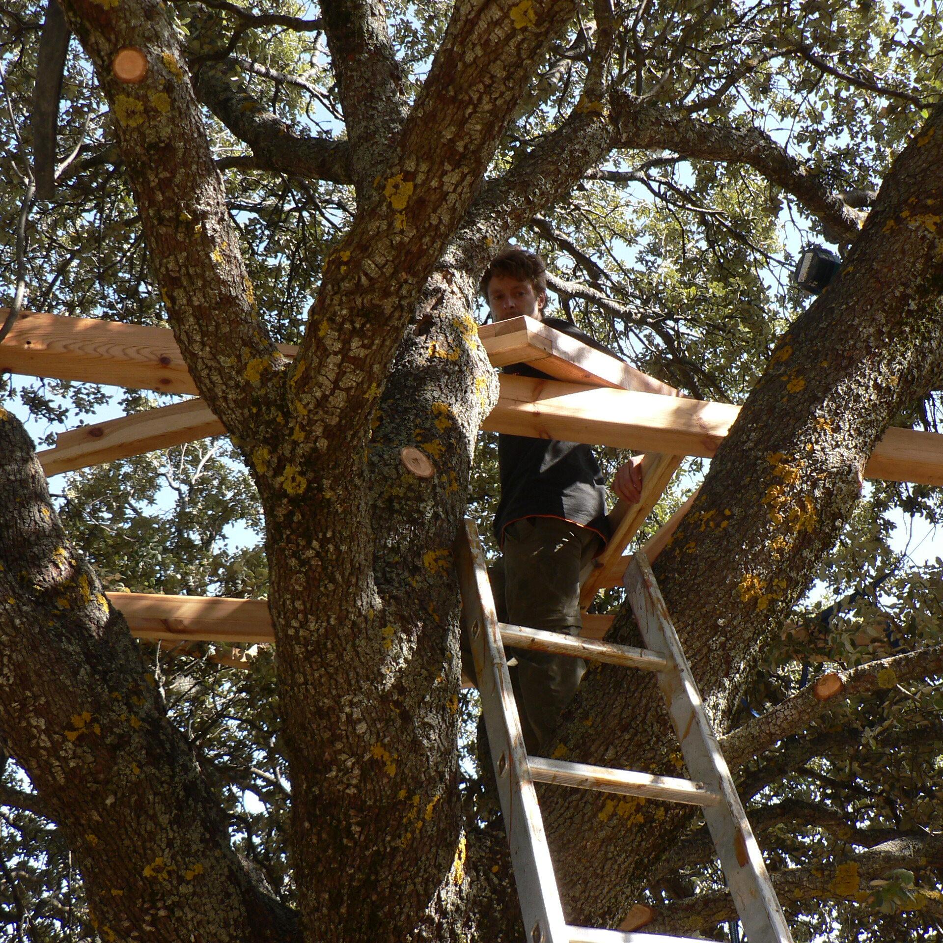 Domo en árbol reciclado