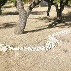 serpiente landart en Prado Negro con Christian Marin
