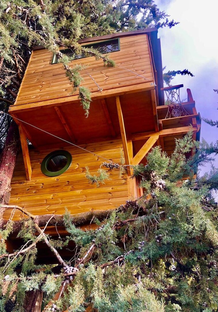 Cabaña arbol nido